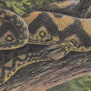 "Rainforest Spiritual Enslavement: Ambient Black Magic [2LP+10""]"