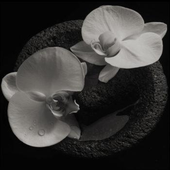 Patton & Jean-Claude Vannier, Mike: Corpse Flower [LP]