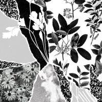 Ponctuation: Mon herbier du monde entier [LP]