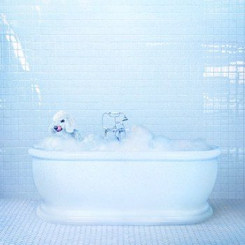 Frankie Cosmos: Vessel [CD]