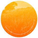 "Pub: Summer / Fragile Root [12"" jaune marbré]"