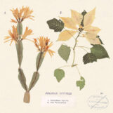 "Hatfield, Juliana: Christmas Cactus / Red Poinsettia [7"", vinyle coloré]"