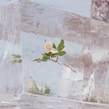 Efterklang: WINDFLOWERS [CD]
